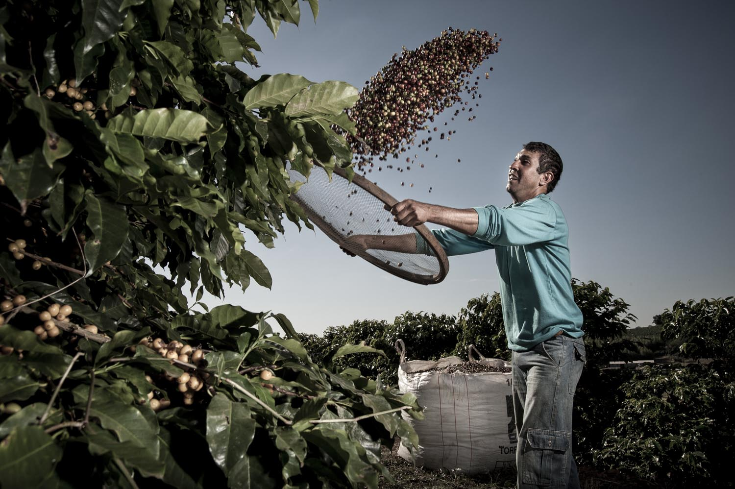 Coffee Harvest, Bloomberg USA.